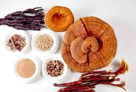 cách chế biến nấm linh chi nghiền bột