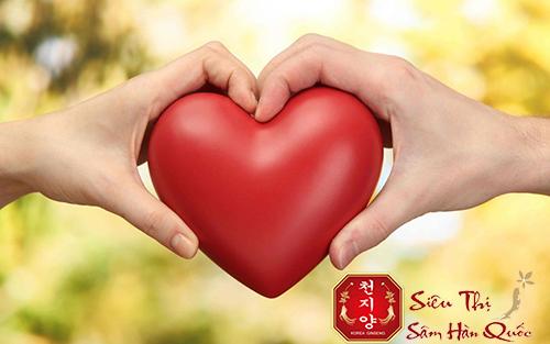 cao hồng sâm tốt cho tim mạch