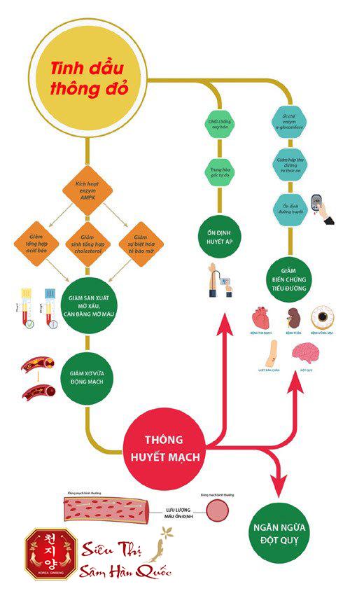 Uống tinh dầu thông đỏ có tác dụng gì?