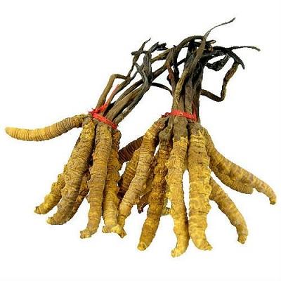 Đông trùng hạ thảo nguyên con tây tạng loại 20g phòng bệnh