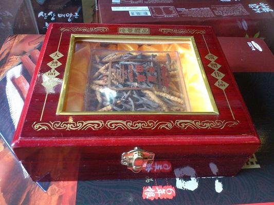 Đông trùng hạ thảo Tây Tạng nguyên con 10g