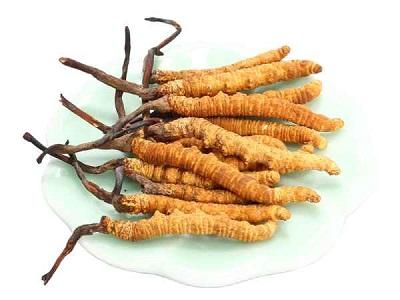Đông trùng hạ thảo Tây Tạng nguyên con tự nhiên hộp 5g