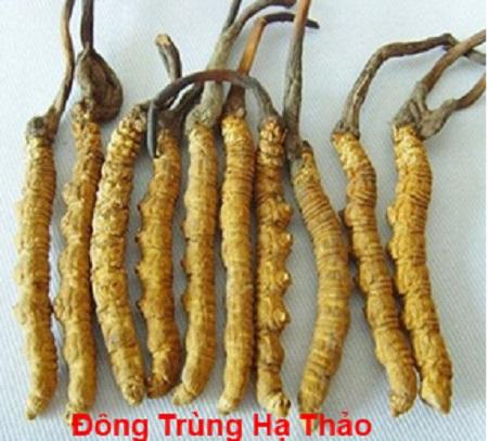 Đông trùng Trung Quốc khác gì Đông trùng hạ thảo Việt Nam?