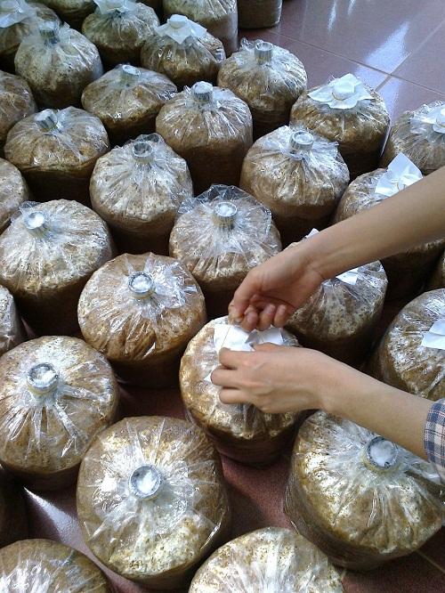 đóng túi để trồng nấm linh chi