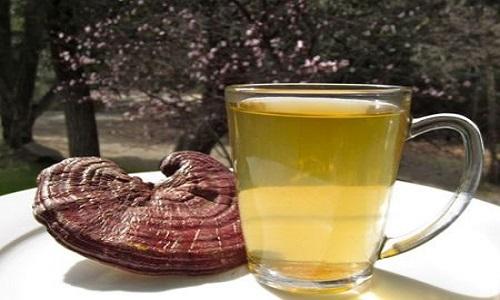 Uống nấm lim xanh chữa ung thư gan có tốt không?