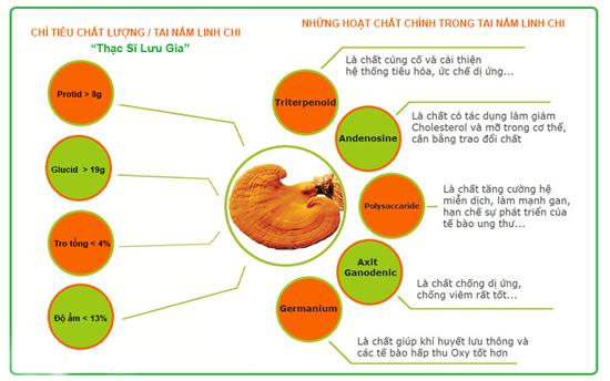 Các hoạt chất quý giá có trong nấm linh chi- thành phần chính của cao linh chi