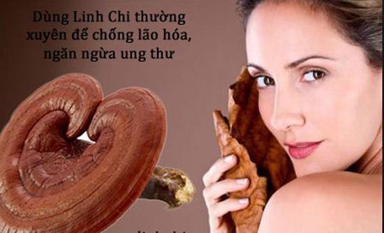Nguồn gốc của nấm linh chi bao tử
