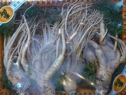 Nhân sâm tươi Hàn Quốc 4 củ trên 1kg