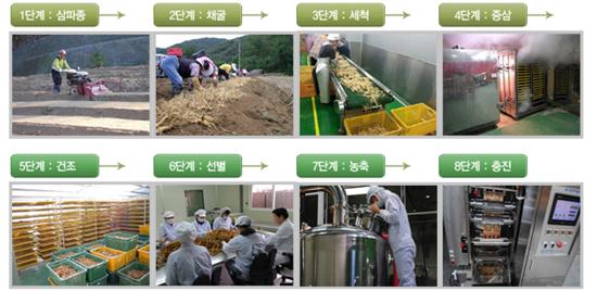 Quy trình sản xuất cao đặc hồng sâm đạt chuẩn chất lượng