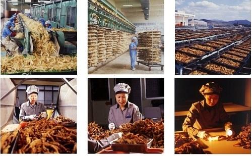 Quá  trình chế biến hồng sâm củ khô Hàn Quốc