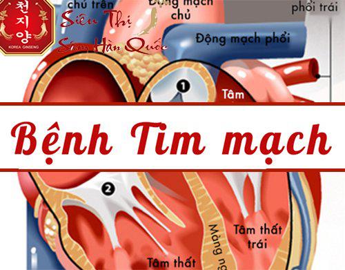 tác dụng của nước đông trùng hạ thảo trong việc  điều hòa tim mạch