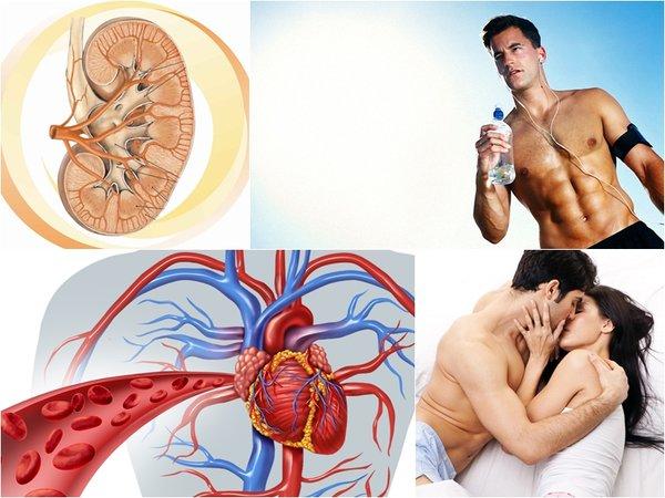 tác dụng của đông trùng hạ thảo djang nước đối với tình dục