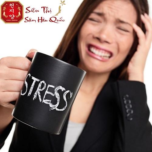 tác dụng của hồng sâm giúp giảm stress