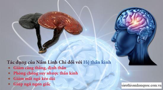 tác dụng của nấm linh chi đối với hệ thần kinh