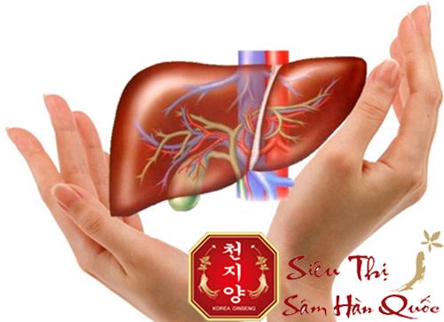tác dụng của hồng sâm giúp giải độc gan