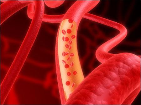 Tác dụng đông trùng hạ thảo đối với hệ tuần hoàn