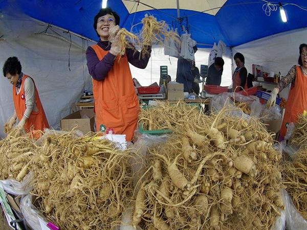 mua nấm linh chi tại hàn quốc